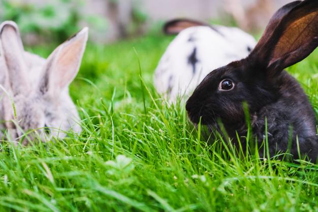 close-up-rabbits-green-grass_23-2147924345